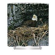 An American Bald Eagle Perches Shower Curtain