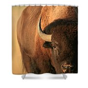 An American Bison In The Early Morning Shower Curtain