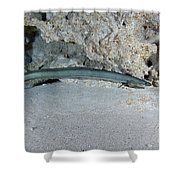 An American Eel Prowls Along The Edge Shower Curtain