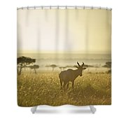 An Antelope Walks In The Grassland At Shower Curtain