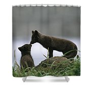 An Arctic Fox And Her Kit.  The Foxes Shower Curtain
