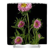 An Aster Flower Aster Ericoides Shower Curtain
