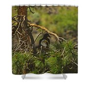 An Eagle And Young Shower Curtain