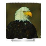 An Eagle Close Up  Shower Curtain