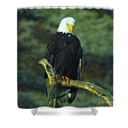 An Eagle Staring Shower Curtain