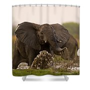 An Elephant Charges When Startled Shower Curtain