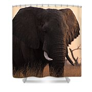 An Elephant In The Okavango Delta Shower Curtain