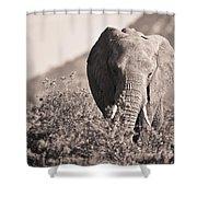 An Elephant Walking In The Bush Samburu Shower Curtain