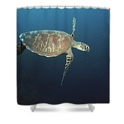 An Endangered Green Sea Turtle Swimming Shower Curtain