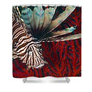 An Invasive Indo-pacific Lionfish Shower Curtain