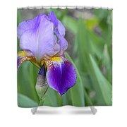 An Iris Blossom Shower Curtain