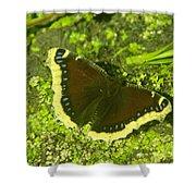An October Butterfly  Shower Curtain