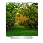 An Orchard Row  Shower Curtain