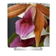 An Orchid, Probably A Cattleya Hybrid Shower Curtain
