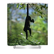 An Unidentified Monkey Hangs Shower Curtain
