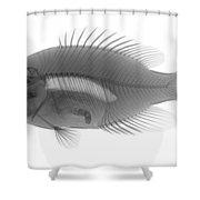 An X-ray Of A Rockbass Shower Curtain