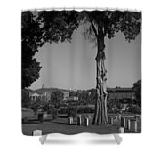 Ancient Cedars And Tombstones Shower Curtain