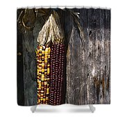 Ancient Corn Shower Curtain