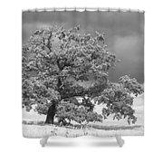 Ancient Oak Shower Curtain