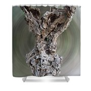 Ancient Old Olive Tree Shower Curtain