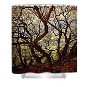 Ancient Winter Tree Shower Curtain