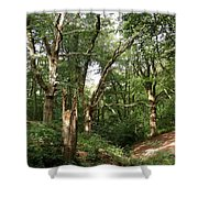 Ancient Woodland Shower Curtain