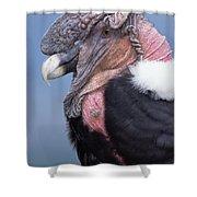 Andean Condor Vultur Gryphus Adult Male Shower Curtain