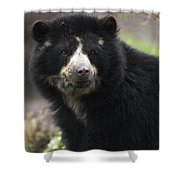 Andean Or Spectacled Bear, Tremarctos Shower Curtain