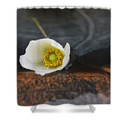Anemone Alone  Shower Curtain