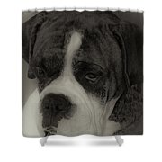 Angelic Boxer Shower Curtain