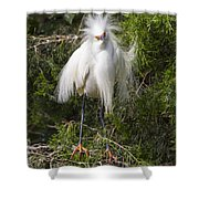 Angry Bird Snowy Egret In Breediing Plumage Shower Curtain