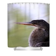 Anhinga - The Emperor Shower Curtain