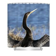Anhinga - Drying Out Shower Curtain