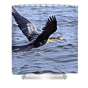 Anhinga In Flight Shower Curtain