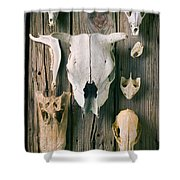 Animal Skulls Shower Curtain