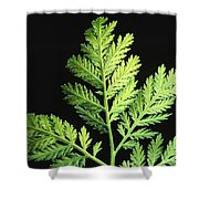 Annual Wormwood Shower Curtain