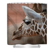 Another Giraffe Shower Curtain