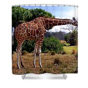 Another Neck Shower Curtain