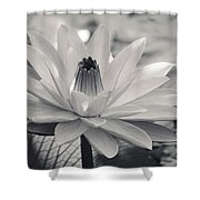 Ansel's Lily Shower Curtain