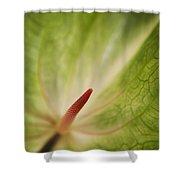 Anthurium Macro Shower Curtain