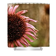 Antique Cone Flower Shower Curtain