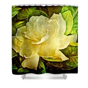 Antique Gardenia Blossom Shower Curtain