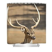 Antlers Shower Curtain