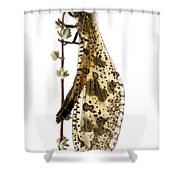 Antlion Fort Fordyce Nature Reserve Shower Curtain