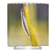 Antlion Shower Curtain