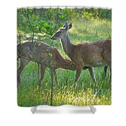 Any Day Now Shower Curtain