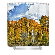 Apen Trees In Fall Shower Curtain