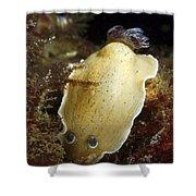 Aphelodoris Varia Sea Slug Nudibranch Shower Curtain
