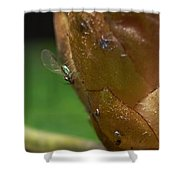 Aphid Shower Curtain