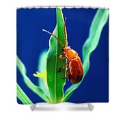 Aphthona Flava Flea Beetle On Leafy Shower Curtain